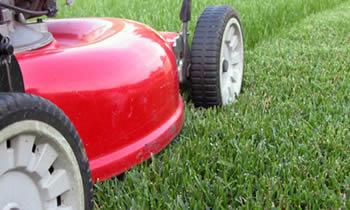Lawn Care Albany Lawn Care Albany Ga