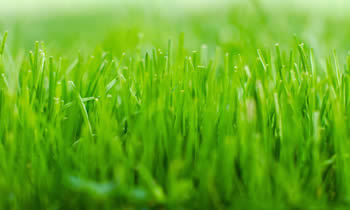 Lawn Service in Albany GA Lawn Care in Albany GA Lawn Mowing in Albany GA Lawn Professionals in Albany GA