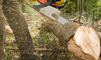 Tree Service in Albany GA Tree Service Estimates in Albany GA Tree Service Quotes in Albany GA Tree Service Professionals in Albany GA