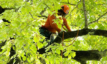 Tree Trimming in Albany GA Tree Trimming Services in Albany GA Tree Trimming Professionals in Albany GA Tree Services in Albany GA Tree Trimming Estimates in Albany GA Tree Trimming Quotes in Albany GA