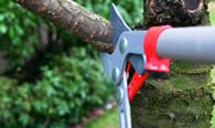 Tree Pruning Services in Albany GA